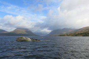 Seals at Loch Etive