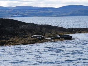 Seals at the Creags